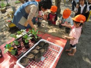 幼稚園をお花やお野菜で一杯にします