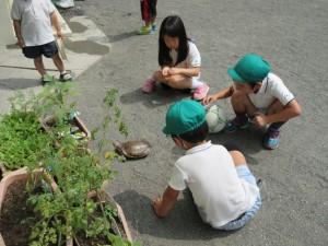 子どもたちも、時間まで亀と遊んでいます。