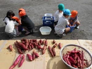 先週の金曜日のお芋掘り遠足で与えられたお芋を洗って焼き芋の準備をしました。
