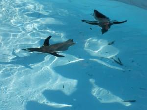 ペンギンも泳いでいました。